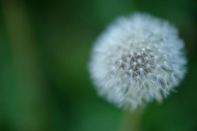 Close-up 07