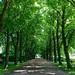Allee, Friedhof Tholenswehr, Emden