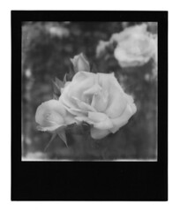 SX-70 B&W, Black Frame (Cris Ward) Tags: blackandwhite bw black slr london film monochrome contrast analog vintage square polaroid sx70 lomo lomography border monotone retro frame instant analogue greyscale impossible blackframe impossibleproject