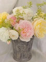 Still life roses (Poppins' Garden) Tags: stilllife rose grey pot fleurdelis thepilgrim ashropshirelad madameplantier