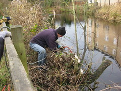 Coppicing Willow on the bank