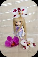 2 (1 of 1) (aremolana19) Tags: cute luna blonde bjd 116 yosd starsisters pukifee
