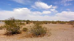 Desert 01488 (Omar Omar) Tags: arizona cactus usa hot southwest cacti américa desert dry az heat 4thofjuly independenceday sonorandesert calor i8 usofa desertsouthwest chaude highway8 interstate8 cuatrodejulio 8freeway