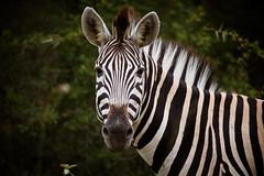 Africa (Zeeyolq Photography) Tags: africa