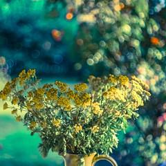 % (c-or^^) Tags: flower fleur bokeh blume krug schafgarbe kletterrosen fiorie ichbineinblmchenfotograf 20140715p1120356