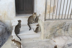 Back home (Florence3) Tags: cats sicily egadiislands levanza