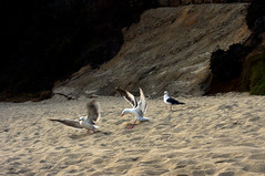 "Seagulls Fighting • <a style=""font-size:0.8em;"" href=""https://www.flickr.com/photos/58191384@N02/14761009626/"" target=""_blank"">View on Flickr</a>"