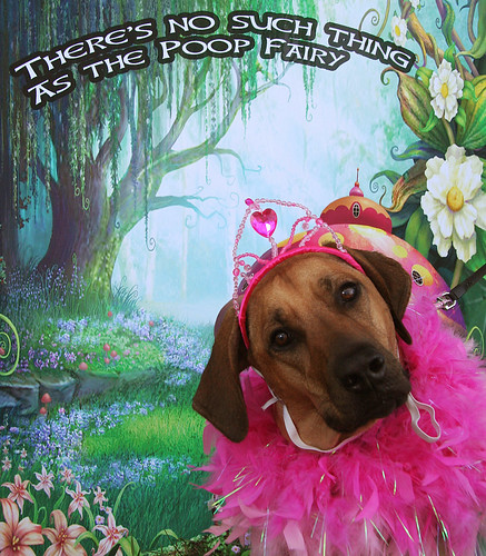 Photo - There is no Poop Fairy! dog photo contest
