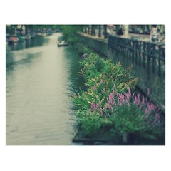 (Vallelitoral) Tags: old flowers plants flores holland cute water amsterdam río vintage river canal nice thenetherlands retro holanda iphone iphonegraphy blurism retrica