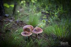 Whip-O-Will Campsites (BasikKl) Tags: camp canon grzyby catskill masroom grzyb campsities