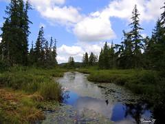 Frog paradise. (Yolanta Z) Tags: nature frogpond stagathe