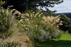 Sheffield Botanical Gardens (Bri_J) Tags: park bench nikon sheffield grasses botanicalgardens d3200