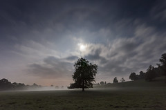 Moonlight, Mist and tree (Malajusted1) Tags: light moon mist tree night nationalpark halo malham skipton yorkshiredales airton gargrave eshton supermoon