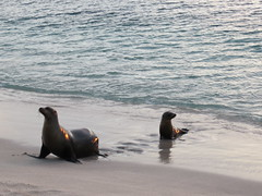 Galapagos - San Cristobal-229