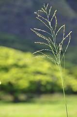 Kualoa Ranch (Rob.Bertholf) Tags: green hawaii oahu country creativecommons greenery lush circleisland