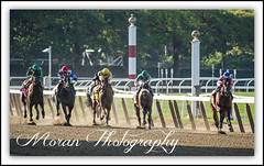 2014 Gallant Bloom (EASY GOER) Tags: horses horse ny sports racetrack race canon track competition running racing event 7d athletes sporting 56 thoroughbred equine thoroughbreds belmontpark 400mm 2014gallantbloom