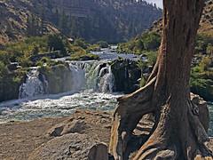 Steelhead Falls (BLMOregon) Tags: wild nature beautiful river outdoors waterfall scenic falls deschutes recreation blm gowild