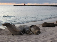 Galapagos - San Cristobal-244