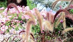 September (farmspeedracer) Tags: park light sky plant flower nature field germany garden wind