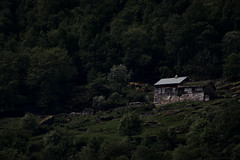 Norwegian Wood (e-box 65) Tags: wood farm cabin forest trees dark green house hill mountain norway scandinavia fjord geiranger flord