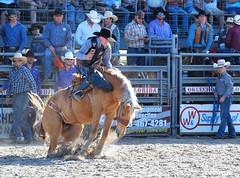 P3110224 (David W. Burrows) Tags: cowboys cowgirls horses cattle bullriding saddlebronc cowboy boots ranch florida ranching children girls boys hats clown bullfighters bullfighting