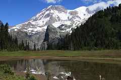 IMG_9277 (Mark Bischoff) Tags: mount rainier mountain cascade range national park washington state glacier snow white rocks cliff peak gray blue sky clouds lake reflection meadow wildflowers wild grass trees green landscape wonderland trail klapatche woods outdoors outside