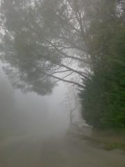 Ventôse accueillant Brumaire. (Gilbert-Noël Sfeir Mont-Liban) Tags: nebel nebbia brouillard fog kesserwan montliban liban mountlebanon lebanon winter baum arbre tree hiver ventôse brumaire mars march