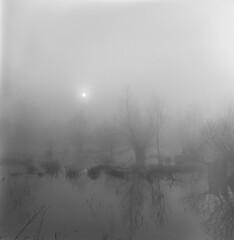 Misty morning (Other dreams) Tags: flexaret foggy misty belar landscape analog fp4 paranols 150 oxbow lake flood pomerania poland bw film grain