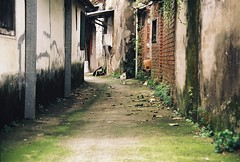 (YL.H) Tags: cat straycats streetcats film analogy canon kodak colorplus taiwan 桃園 大溪 貓 街貓 底片