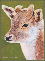 Junges Reh - Young Roe (antje whv) Tags: reh roe tier animal malerei painting acryl