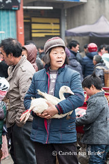 Chickens? Oh (10b travelling) Tags: 10btravelling 2016 asia asie asien carstentenbrink changjiao china chine chinese genericplaces guizhou iptcbasic liuzhi longga longhorn miao otherkeywords prc peoplesrepublicofchina southwest suoga bird duck market south southernchina tenbrink woman 中华人民共和国 中国