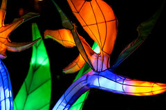 Alien flora (LynxDaemon) Tags: lantern chinese botanicalgarden montreal colors light alien flower rainbow