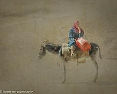 In the Desert Wind (booster90017) Tags: petraagainstthewind jordan donkey water sand wind ngc