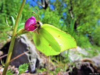Butterfly 1202