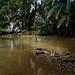 Amazonian woman in her natural habitat ;)