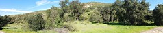 Oaks of Santiago Canyon (EmperorNorton47) Tags: california photo digital winter panorama santiagocanyon silverado forest trees oaks canyon