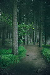 Green Is The Colour (ferreira.ajbf) Tags: nature trees forest path green landscape mystery