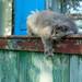 Funny cat posing