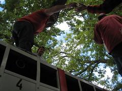 Desencajonamiento-2014_0555