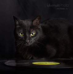 black (silversaltphoto) Tags: black cat studio negro gato fujifilm yelow senosiain javiersenosiain silversaltphoto fujixt1