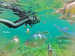 XD (Moson Kuo) Tags: travel fish seascape beautiful landscape boats amazing nikon scenery honeymoon diving spa ultrawide palau      2014 koror      jellyfishlake   gopro hero3        palauroyalresort  longrainbow   d800e  afs1424mm28g