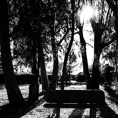 Melancholy (Angelo Pantazis) Tags: trees blackandwhite bw moments mood dreams nolstagic atmophere