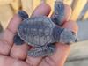 Baby Turtle, Serangan Island Turtle Conservation Centre, Bali, Indonesia (dannymfoster) Tags: bali indonesia turtle seranganisland