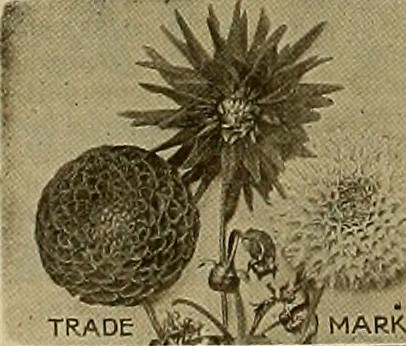 """Image from page 209 of """"The Florists' exchange : a weekly medium of interchange for florists, nurserymen, seedsmen and the trade in general"""" (1888)"""