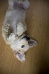 DSC_0927 (Manuel D Sánchez) Tags: dogs perros dogos seleccionar