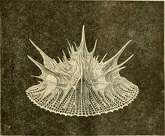 Anglų lietuvių žodynas. Žodis copepod crustacean reiškia copepod) lietuviškai.