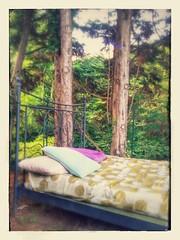 Good Night  #love #TagsForLikes #TFLers #tweegram #photooftheday #20likes #amazing #smile #follow4follow #like4like #look #instalike #igers #picoftheday #food #instadaily #instafollow #followme #girl #iphoneonly #bed #trees #nature #instagood #bestoftheda (! .  Angela Lobefaro . !) Tags: trees tree nature bed pillows pillow piemonte lit biella piedmont letto bedding kissen piemont valdengo cuscino cuscini biellese