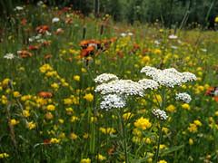 Wildflowers next to Highway, July 4th weekend