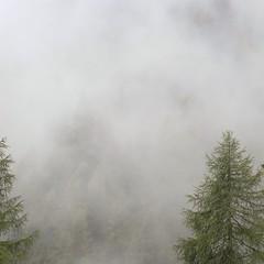 away we go (nebuls) (anna.caterina) Tags: mist mountains fog forest square landscape austria tirol nebel minimal berge squareformat alm landschaft wald cloudysky wolkenlandschaft instagramapp