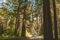 The Road (wenzday01) Tags: california statepark road park ca travel trees nature forest vanishingpoint woods nikon driving redwoods nikkor crescentcity jedediahsmith d90 jedediahsmithredwoodsstatepark redwoodnationalandstateparks nikond90 18105mmf3556gedafsvrdx